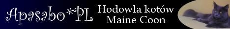 Maine Coon - hodowla Apasabo*PL