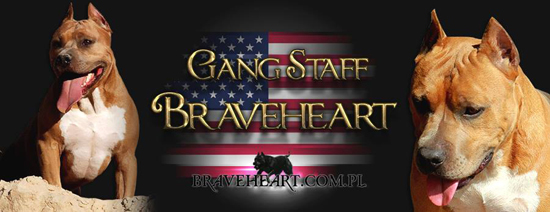 Gang Staff Braveheart
